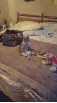 Funny, Watch, and Watches: she came into her room to find her cat sitting like a human watching tv 😂