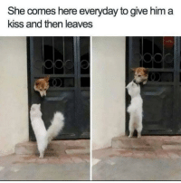 Love, True, and Kiss: She comes here everyday to give him a  kiss and then leaves True love