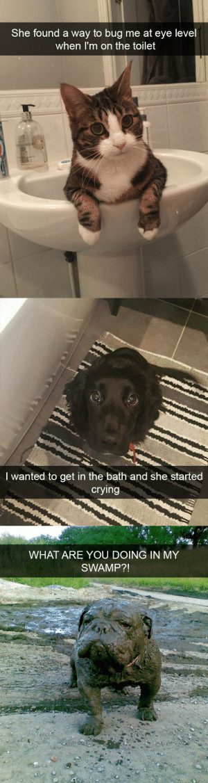 Crying, Target, and Tumblr: She found a way to bug me at eye level  when I'm on the toilet   I wanted to get in the bath and she started  crying   WHAT ARE YOU DOING IN MY  SWAMP?! animalsnaps:Animal snaps