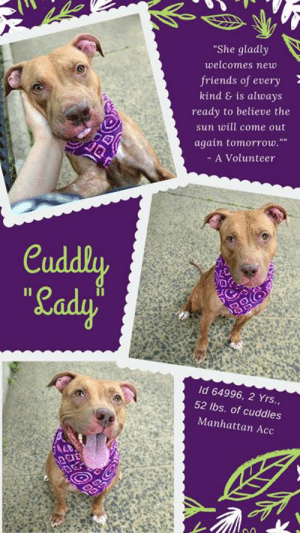 """Being Alone, Benadryl, and Cats: """"She gladly  welcomes new  friends of every  kind & is always  ready to believe the  sun will come out  again tomorrow.  A Volunteer  Cuddly  Lady'  Id 64996, 2 Yrs.,  52 lbs. of cuddles  Manhattan Acc TO BE KILLED - 6/25/2019  Bouncy, sweet, cuddly, and very special, LADY is an absolute gem of a dog who makes friends of every kind – adults, kids, strangers, and dogs alike! We're smitten!  <3  A volunteer writes: """"Lady Luck may not yet have smiled on this particular Lady but you'd never know it from her upbeat attitude and open-hearted goodwill toward the world. She's like Pollyanna and Annie rolled into one goofy teen puppy package, gladly welcoming new friends of every kind and always ready to believe the sun will come out again tomorrow. Excitable, playful and outgoing with strangers, kids and dogs alike, Lady's always on the move. Even when she's standing still, her curious eyes are on the lookout for squirrels to chase or passing folks to befriend. She does know how to sit and stay on command but prefers running around with her peers in the yard or giving out bouncy hugs to anyone who'll have her, so we're hoping she'll find a family who relishes being active and exploring the great outdoors as much as she does. Lady is a diamond in the rough, but with a lot of love and a little polish to her manners, she's going to light up your life like no one else. Ask to meet this cutie at our Manhattan Care Center and let her shine for you!"""" Message our page or email us at MustLoveDogsNYC@gmail.com for assistance fostering or adopting this cuddly, sweet and very special girl.  MY MOVIES: Lady, let's have a ball  https://youtu.be/_vEUKZfFT5M  LADY, ID# 64996, 2 yrs old, 52 lbs, Unaltered Female Manhattan ACC, Large Mixed Breed, Tan  Owner Surrender Reason:  Shelter Assessment Rating: LEVEL 2 No young children (under 5) Medical Behavior Rating:   OWNER SURRENDER NOTES - BASIC INFORMATION:  Lady is a large mixed breed female dog. She is unalt"""