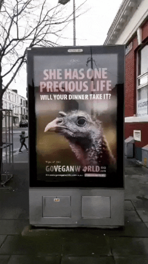 Turkey: SHE HAS ONE  PRECIOUS LIFE  WILL YOUR DINNER TAKE IT?  CADW  GOVEGANWRLD  no  .om  www.govep d.comm Turkey