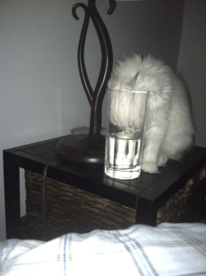She insists on drinking out of MY water.http://meme-rage.tumblr.com: She insists on drinking out of MY water.http://meme-rage.tumblr.com