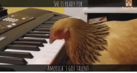 America, Memes, and Piano: SHE IS READY FOR  AMERICA GOT TALENT #adorable #hen #playing #piano