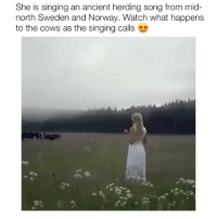 Memes, Singing, and Nature: She is singing an ancient herding song from mid  north Sweden and Norway. Watch what happens  to the cows as the singing calls Amazing 😍🙏 nature oneness