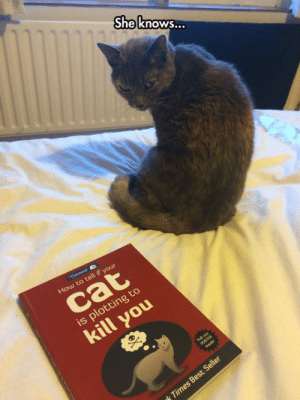Tumblr, Best, and Blog: She know...  Oatmeal  How to tell if your  cat  is plotting to  kill you  Pul-o  POSTER  lnsde  k Times Best Seller lolzandtrollz:  Oh No, She's Into Me