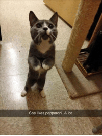 Funny, Photos, and Pepperoni: She likes pepperoni. A lot. 24 Funny Photos You Really Just Need To See For Yourself