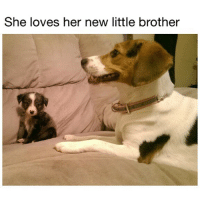 (@dogsbeingbasic) is my source for daily pupper cuteness. (📸: Reddit u-ColdCruise): She loves her new little brother (@dogsbeingbasic) is my source for daily pupper cuteness. (📸: Reddit u-ColdCruise)