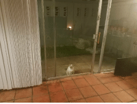 Crying, Funny, and Cat: She sat there for a full 15 minutes crying to be let in. She is not a smart cat.