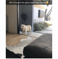 Memes, Thought, and 🤖: She thought the glass door was closed I needed this 😍 Credit: @skinnerwill4