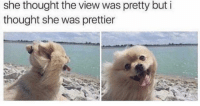 Girl, Good, and Http: she thought the view was pretty but i  thought she was prettier Good girl via /r/wholesomememes http://bit.ly/2DwOhnu