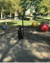 Dogs, Girl Memes, and Waiting...: she took her dog to the dog park and no dogs were there so he sat there waiting like 😭😭 https://t.co/wjlNeiTmpL