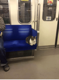 Train, Girl Memes, and Midnight: she took the midnight train going anywhere https://t.co/8l35kPmnUG