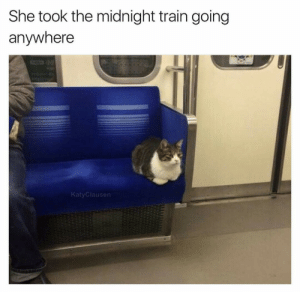 Gucci, Tumblr, and Blog: She took the midnight train going  anywhere  KatyClausen gucci-flipflops:  Just a small town cat