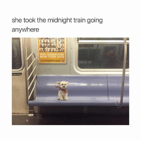 Love, New York, and I Love You: she took the midnight train going  anywhere  NEW YORKERS KEEP  NEW YORK SAFE I love you doggie