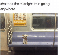 Lean, Memes, and New York: she took the midnight train going  anywhere  NEW YORKERS KEEP  NEW YORK SAFE  t lean on door See you later doggo