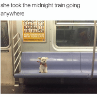 Dogs, Funny, and Lean: she took the midnight train going  anywhere  NEW YORKERS KEEP  NEW YORK SAFE  t lean ondoor We don't deserve dogs