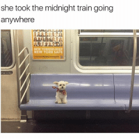 Another animal post because it's a vibe: she took the midnight train going  anywhere  NEW YORKERS KEEP  NEW YORK SAFE  tlean on door Another animal post because it's a vibe