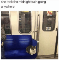 Memes, Singing, and Train: she took the midnight train going  anywhere Remember that guy that died in that singing show I forgot his name and the show u know that show with all the singing