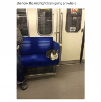 Funny, Ted, and Train: she took the midnight train going anywhere Strong independent cat who don't need no man (@hilarious.ted)