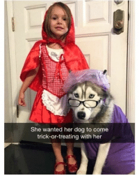 Cute, Memes, and 🤖: She wanted her dog to come  trick-or-treating with her Too cute! 😂