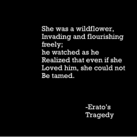 Him, She, and Wildflower: She was a wildflower,  Invading and flourishing  freely;  he watched as he  Realized that even if she  Loved him, she could not  Be tamed  Erato's  Tragedy @eratos-