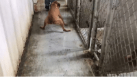 Memes, Tup, and Arias: She was dragged across the floor by a shelter staff member. Authorities say this is not illegal... But they could have given her respect and love. Keep reading to learn what we did next : http://dogco.org/save-aria-tup