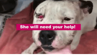Blunts, Memes, and Beats: She will need your help! WTF... They shot Kimber in the head... They beat her with a blunt object... then left her to die in the road. CLICK THE LINK TO HELP US FIND HER ABUSER! ... Keep reading: http://dogco.org/save-kimber-rdr
