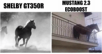 It's funny because it's true. Car memes: SHELBY GT350R  MUSTANG 2.3  ECOBOOST It's funny because it's true. Car memes