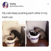 Cats, Funny, and Trash: Shelby  @ifeellikecelery  My cats keep pushing each other in my  trash can 🚫 WARNING 🚫 😂 @epicfunnypage is literally the funniest page , hurry and follow👌🏻👌🏻
