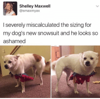 Dogs, Memes, and 🤖: Shelley Maxwell  @smaxmyax  I severely miscalculated the sizing for  my dog's new snowsuit and he looks so  ashamed The doggo is not pleased