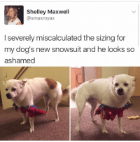 Memes, 🤖, and Maxwell: Shelley Maxwell  @smaxmyax  l severely miscalculated the sizing for  my dog's new snowsuit and he looks so  ashamed What are you even doing