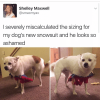 Memes, 🤖, and Epic: Shelley Maxwell  @smaxmyax  severely miscalculated the sizing for  my dog's new snowsuit and he looks so  ashamed 😂😂😂lmao - -(RP @kalesalad - 420 memesdaily Relatable dank MarchMadness HoodJokes Hilarious Comedy HoodHumor ZeroChill Jokes Funny KanyeWest KimKardashian litasf KylieJenner JustinBieber Squad Crazy Omg Accurate Kardashians Epic bieber Weed TagSomeone hiphop trump rap drake