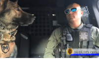 Police Officer and His K-9 Partner Lip Sync Disney Song: SHERIFFS OFFIC Police Officer and His K-9 Partner Lip Sync Disney Song