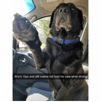 Dog snaps: She's 13yo and still makes me hold her paw while driving Dog snaps