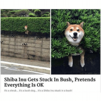 Definitely, Memes, and Animal: Shiba Inu Gets Stuck In Bush, Pretends  Everything Is OK  It's a shrub... it's a bush dog... it's a Shiba Inu stuck in a bush! This dog is definitely my spirit animal | @cuteandfuzzybunch 🐶