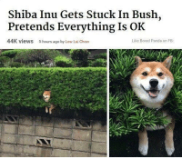 Bored, Panda, and Shiba Inu: Shiba Inu Gets Stuck In Bush,  Pretends Everything Is OK  44K views  5 hours ago by Low Lai Chow  Like Bored Panda on FB meirl