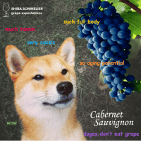 """Target, Tumblr, and Wow: SHIBA SOMMELIER  grape expectations  such full body  much tannin  very CassiS  so aging potentia  d.  Cabernet  Sauvignon  WoW  doges,don't eat grape <p><a class=""""tumblr_blog"""" href=""""http://shibasommelier.com/post/78863164167/educate"""" target=""""_blank"""">shibasommelier</a>:</p> <blockquote> <p>EDUCATE.</p> </blockquote>"""