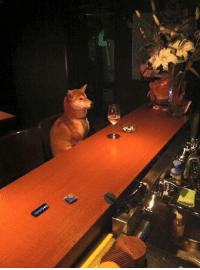 shibe needs a time alone to reflect in his new year resolutions: shibe needs a time alone to reflect in his new year resolutions