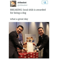 look at this!!! @adriana.xviii: shibesbot  N @shibes bot  BREAKING: local shib is awarded  for being a dog  What a great day look at this!!! @adriana.xviii