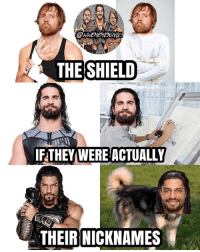 Memes, Wrestlemania, and Charlotte: SHIELD  THE THEY WERE ACTUALLY  THEIR NICKNAMES Dean would be a lunatic, Seth would be an architect, and Roman would be a big dog 😂😂😂 kevinowens chrisjericho romanreigns braunstrowman sethrollins ajstyles deanambrose randyorton braywyatt tripleh shanemcmahon charlotte shinsukenakamura samizayn johncena sashabanks brocklesnar goldberg bayley alexabliss themiz finnbalor kurtangle wrestlemania wwememes wwememe wwefunny wrestlingmemes wweraw wwesmackdown