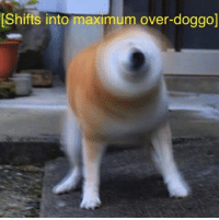 doggo: Shifts into maximum over-doggo