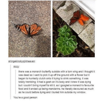 favourite food: shingekinokyojinheaven  there was a monarch butterfly outside with a torn wing and i thought it  was dead so i went to pick it up off the ground with a flower but it  began to hurriedly clutch onto it trying to drink something. it was  totally trembling: it had a gash on it's body and i knew it was dying  buticouldn't bring myself to kill it, so igoogled a monarch's favourite  food and it ended up being mandarins. he literally devoured as much  as he could before dying and iburied him outside my window.  You're a good person