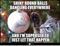 Memes, Pictures, and 🤖: SHINY ROUND BALLS  DANGLING EVERYWHERE  AND ITM SUPPOSED TO  JUST LET THAT HAPPEN  cards (y) Funny Cat Pictures If you enjoy our updates and want to see them regularly you have to interact with them or turn on notifications for the fanpage.