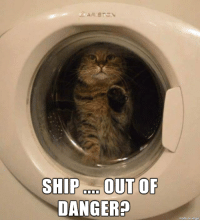 Cats, Don, and Ship: SHIP OUT OF  DANGER?  made don imaur The Wrath of Cats