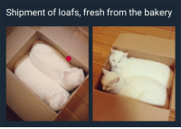 Animals, Fresh, and Funny: Shipment of loafs, fresh from the bakery 60 Funny Animals Pictures To Laugh At When You are Out At Work