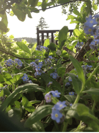 shipshapewithsliders: Forget-Me-Not I have left. Everything that happened, Your abominable churlish, Obnoxiousness. Discounted as…. Just hullabaloo - To you. This I had to break free - For me. - Lisa Lopresti : shipshapewithsliders: Forget-Me-Not I have left. Everything that happened, Your abominable churlish, Obnoxiousness. Discounted as…. Just hullabaloo - To you. This I had to break free - For me. - Lisa Lopresti
