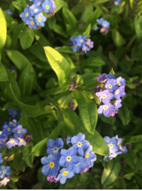 shipshapewithsliders:  Forget-Me-Not I have left. Everything that happened, Your abominable churlish, Obnoxiousness. Discounted as…. Just hullabaloo - To you. This I had to break free - For me.  - source - Lisa Lopresti : shipshapewithsliders:  Forget-Me-Not I have left. Everything that happened, Your abominable churlish, Obnoxiousness. Discounted as…. Just hullabaloo - To you. This I had to break free - For me.  - source - Lisa Lopresti