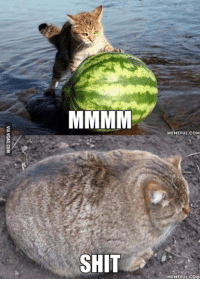 I have a cat, I have a melon. Ugh! Catermelon.: SHIT  MEMEFUL COM  MEMEFUL COM I have a cat, I have a melon. Ugh! Catermelon.