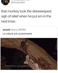 Tumblr, Blog, and Monkey: @shivawalks  that monkey took the deeeeeepest  sigh of relief when he put em in the  nest Imao  azazel @aza_88888  La nature est surprenante  © wildlife Films: www.wildlifefilms memecollege: