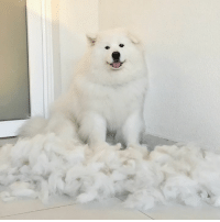 shoobie what have you done to your brother: shoobie what have you done to your brother